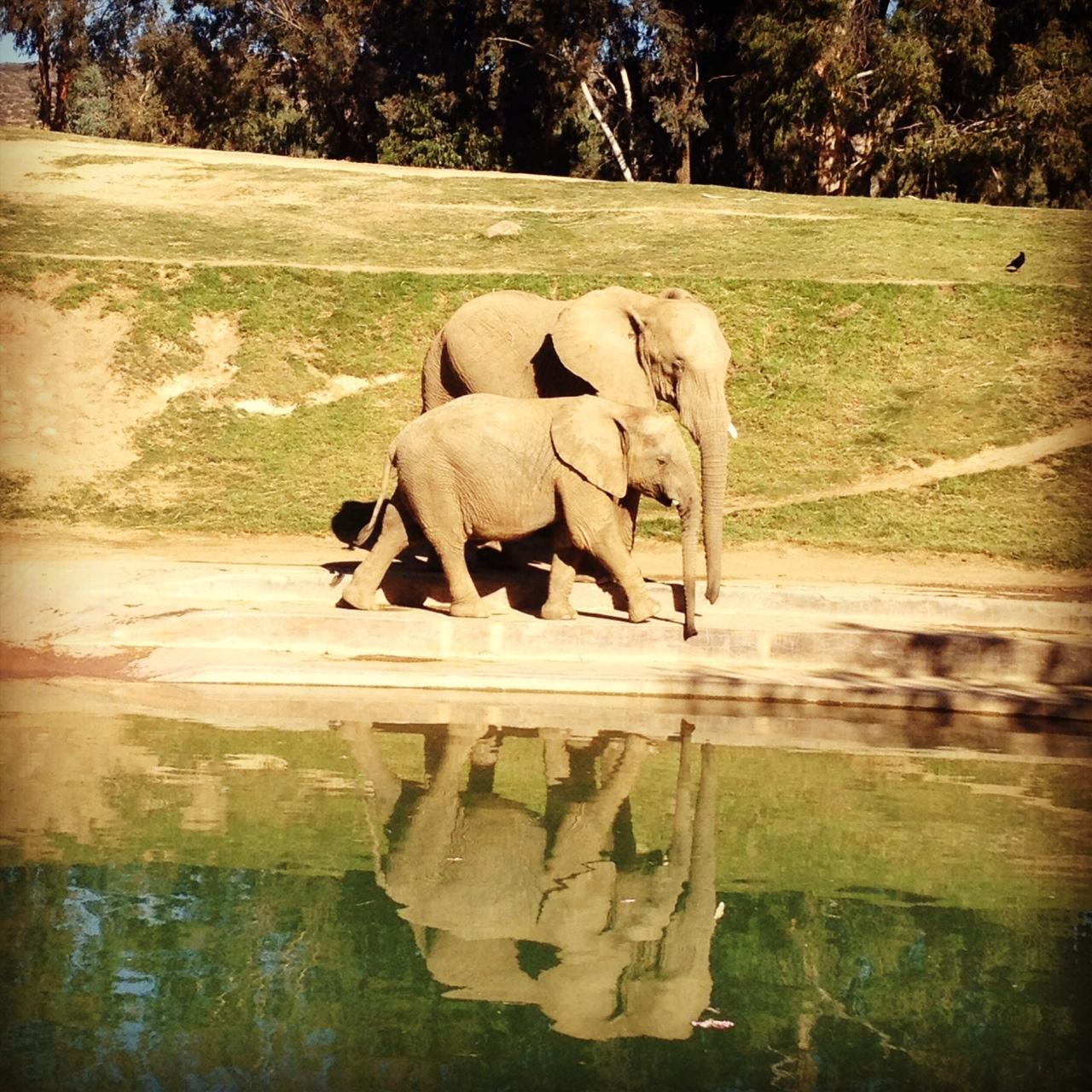 elephants-WhatWouldGwynethDo